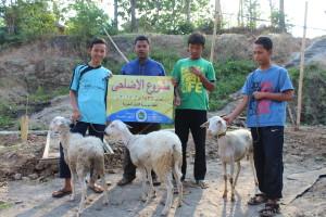 Kambing yang disalurkan oleh Yayasan Al Kautsar Khoiriyah Jakarta-Indonesia